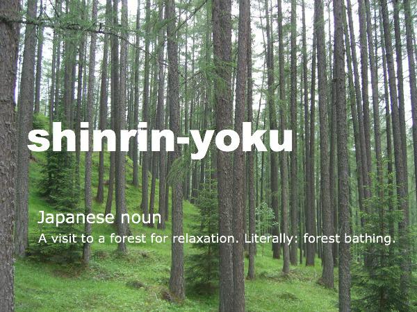 shinrinyoku