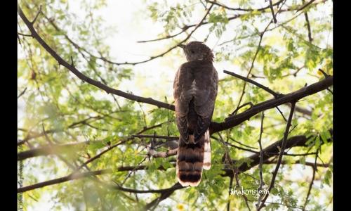 sultanpur national park bird sanctuary