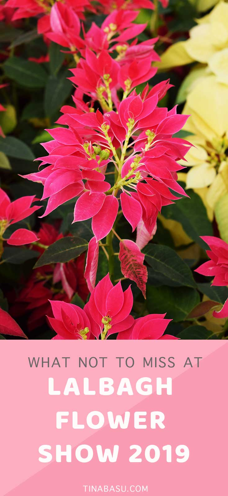 what not to miss at lalbagh flower show